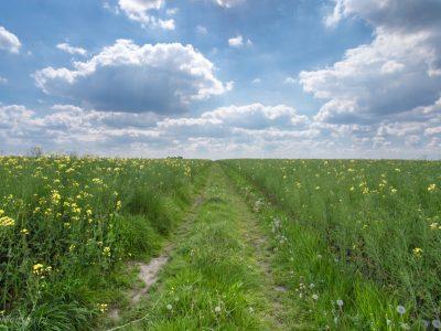 1674Polskie pola <br><i> Polish cultivated fields</i>