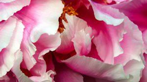 fotografia zdjęcie foto przyroda kwiaty