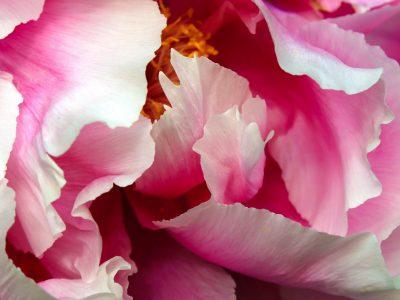 133Kwiaty <br><i> Flowers</i>