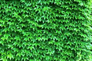 fotografia zdjęcie foto przyroda liście