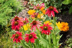 flowers-20150712-6777
