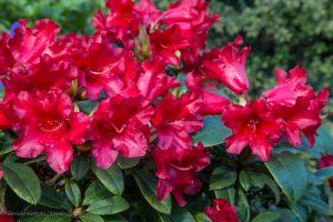 kwiaty-20150502-6071