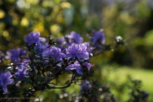kwiaty-20150502-6079