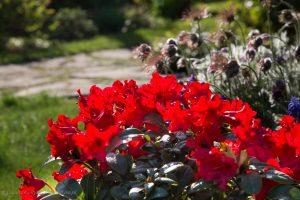 kwiaty-20150502-6083