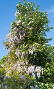 kwiaty-20150513-6180