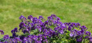 kwiaty_-20150606-6449