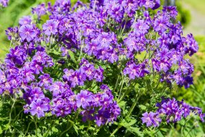kwiaty_-20150606-6450