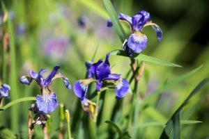 kwiaty_-20150606-6456