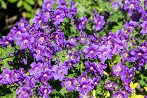 kwiaty_-20150606-6459