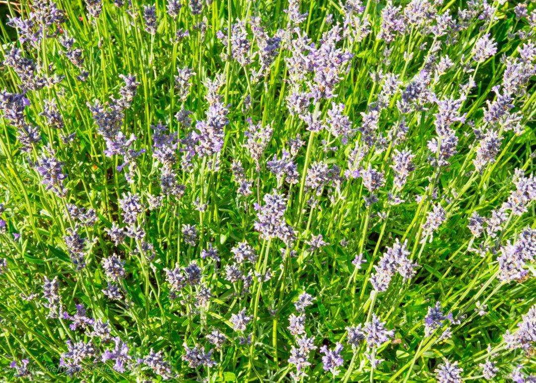 fotografia zdjęcie foto kwiaty