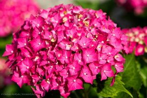 flowers-20150711-6755