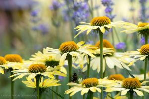 flowers-20150711-6760