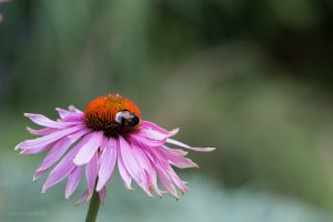 flowers-20150711-6764